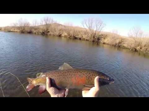 рыбалка в горных каньонах монголии