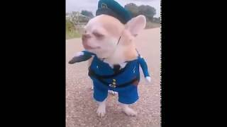 Funny Dog Officer - Funny Videos