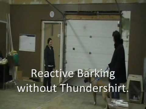 Thundershirt  Before Amp After Videos