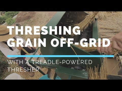 Threshing Wheat with a Treadle Thresher
