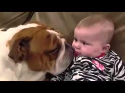 Бульдог целует ребенка
