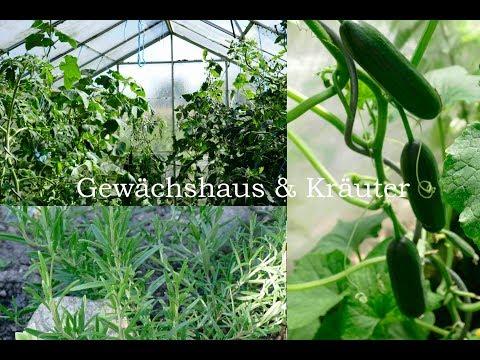 bepflanzte Kräuterspirale & volles Gewächshaus | Gurken- und Tomatenernte | #12