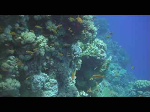 Southern Red Sea 1