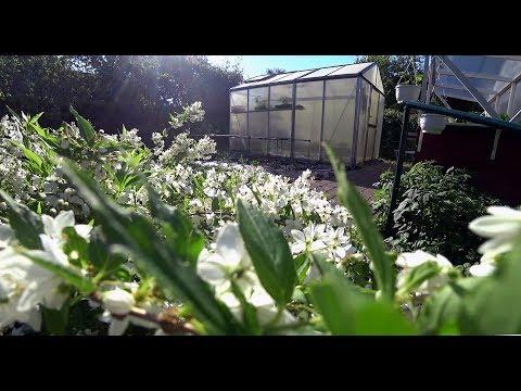 Mein Garten, mein Gewächshaus, der Frühling und ich, Film 59