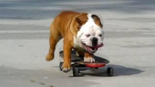 Skateboarding Dog - HD Redux