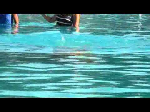 Curso B  Sico De Buceo Snorkeling