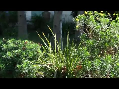 How to Landscape a Small Garden : Landscaping Tips