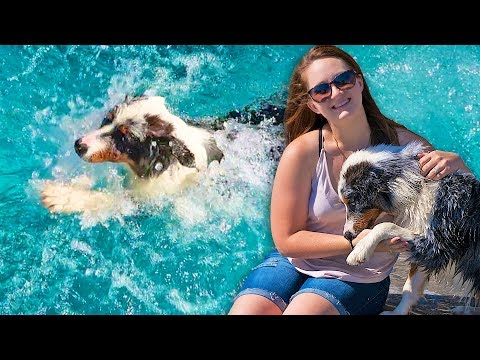 PUPPY SWIMMING POOL DISASTER! TEACHING OUR PUPPY HOW TO SWIM!