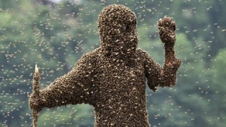 Killer Bees - Scary Bee Documentary (Earth Documentaries)