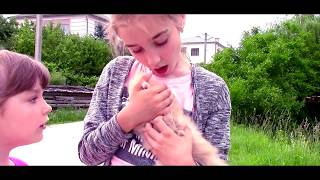 We found a Small Kitten! Learning video for kids babies and family