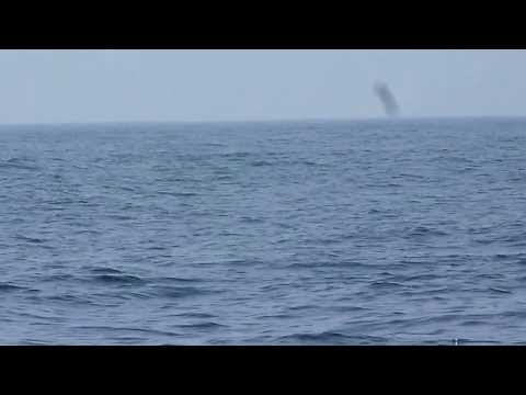 Blue Whale Off The Coast Of Galle, Sri Lanka video