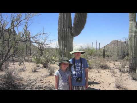 Petroglyph Art at Saguaro National Park