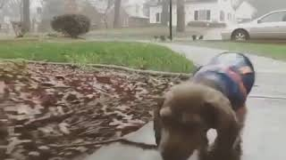 Cute puppy is walking under the rain