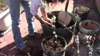 Como sembrar cualquier arbol de una rama