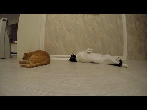 【原子邦妮-地球日誌】被貓弄凹的電腦 #vlog #68