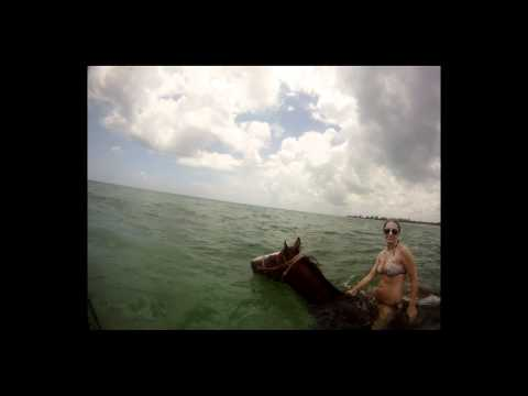Pampered Ponies Swim with Horses Ride in Grand Cayman