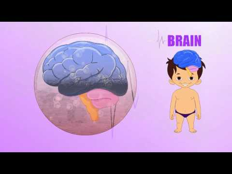 Inside The Human Brain For Kids Brain Human Body Parts