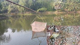 Fishing | Latest Fish Trap Using Mosquito Net & Bamboo | Amazing Way Of Catching Country Fish