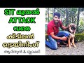 """6 month german shepherd : dog training : """" advanced commands""""  : attack : Search : Stay : LAZE MEDIA"""