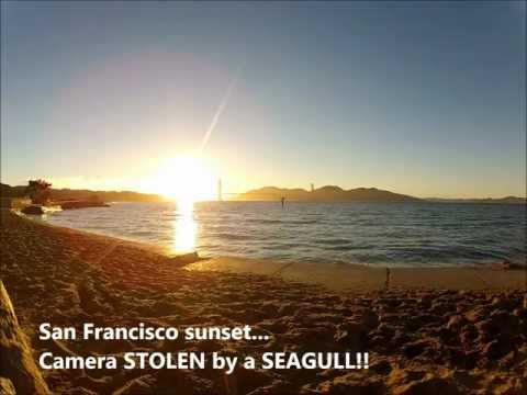 0 Best of YouTube: A seagull steals a GoPro