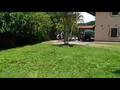 Caballos de Paso Costarricense en Venta Caballo Costarricense de Paso