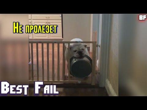 ЛУЧШИЕ ПРИКОЛЫ МАЙ 2017 | Лучшая Подборка Приколов #38