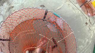 Mud Crabbing in Moreton Bay