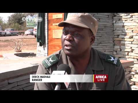 Eco Africa: South Africa Rhinos Endangered