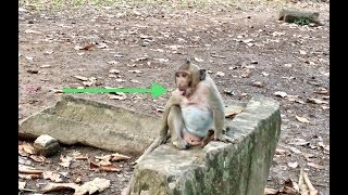 Why no one wants to play with Sweat Pea Spoil baby monkey?