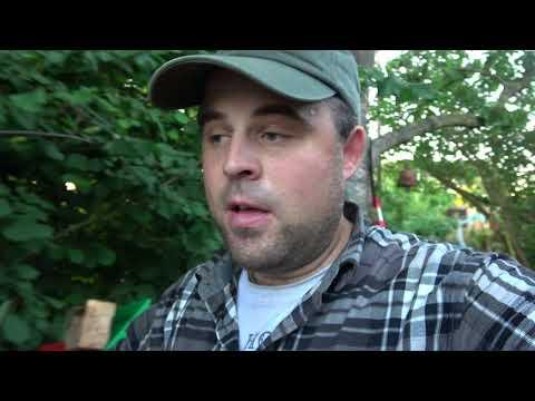 Buschbohnen Legen Im Gemüsegarten