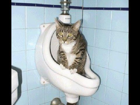 Экстаз  юмор 31) Кот редкий говнюк! приколы кошки, коты