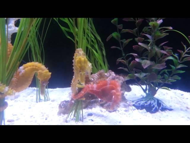 Dallas world Aquarium 2014