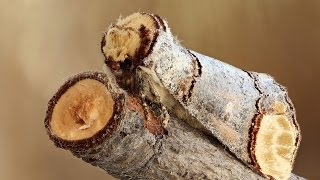 12 Coolest Camouflage Animals and Insects