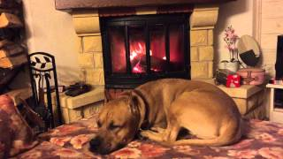 Jotul I18 and dog
