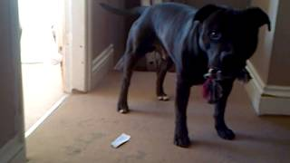 my dog playing with me xxx