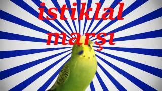 İSTİKLAL MARŞI Papağan Ve Muhabbet Kuşu ISLIK ÇALMA EĞİTİM Sesi Ses Kaydı 1 SAAT🇹🇷