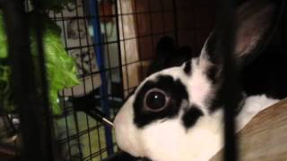 Bunnicula and Tribble - New things in my cage!