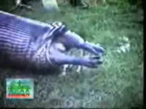 Snake Eating then Throwing up a hippo! - YouTube
