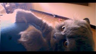 Ao Som de Acordando o Prédio de Luan Santana - Gato Valentin