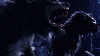 Watch Rob Zombie Werewolf Baby video