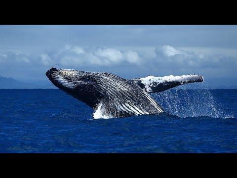 Увидели китов прямо с балкона отеля! По АФРИКЕ на машине! Часть 4