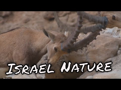 Israel Nature in motion