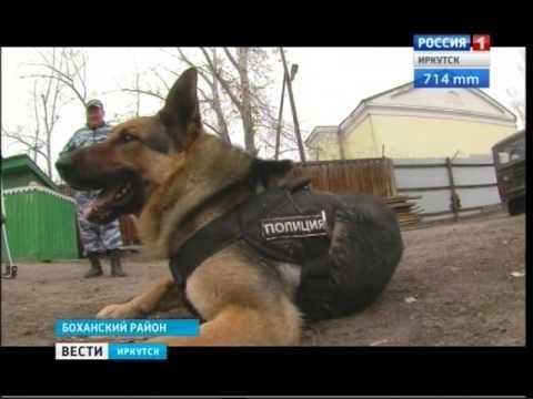 Полицейский пёс Чак в Боханском районе получил медаль за отличную службу, Вести-Иркутск