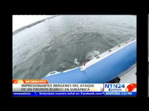 Impresionantes imágenes de un ataque de tiburón a un bote neumático conmociona la red
