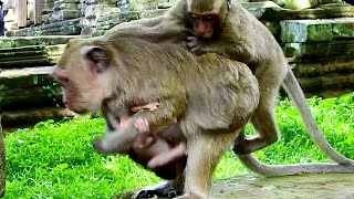 Omg! Dee Dee jumps to catch baby Polly, Poor Popeye so scare and careful Dee Dee Polly