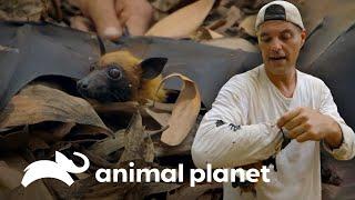 3 Especies únicas en el mundo | Wild Frank | Animal Planet