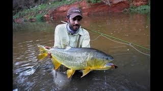 Sabalo grande con mosca fly fishing gopro session