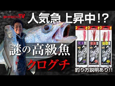 人気急上昇中!?謎の高級魚クログチ