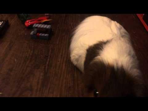 Guinea Pigzilla: The Movie