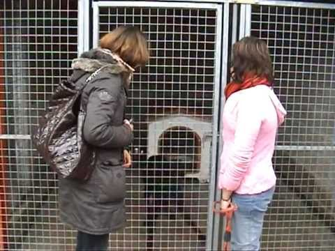 Refuge des chiens et chats de Touques Calvados, le vert Buisson